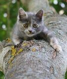Graues Kätzchen auf einem Baum Stockfotos