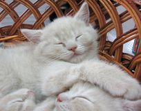Graues Kätzchen, das im Korb schläft lizenzfreies stockbild
