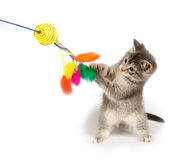 Graues Kätzchen, das mit Spielzeug spielt Stockfotos