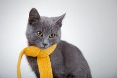 Graues Kätzchen im gelben Schal auf einem weißen Hintergrund, rauchige Katze herein Lizenzfreie Stockbilder