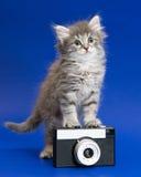 Graues Kätzchen und Kamera Stockbilder