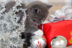 Graues Kätzchen und Weihnachten Stockfoto