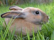 Graues Kaninchen Stockfotos