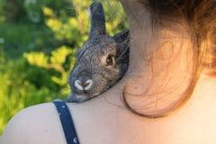 Graues Kaninchen stockbilder