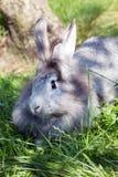 Graues Kaninchen, das im Gras sitzt lizenzfreie stockfotografie