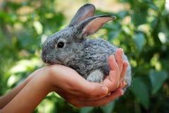 Graues Kaninchen in der Hand Lizenzfreie Stockfotografie