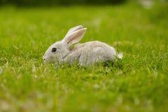 Graues Kaninchen im Sommerpark Lizenzfreies Stockfoto