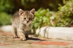 Graues kleines unbeholfenes Kätzchen Stockbild