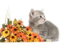 Graues Kätzchen und Blumen Stockfotografie