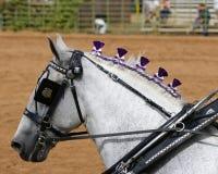 Graues Pferd in der Reitheftzwecke Lizenzfreie Stockbilder