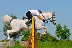 Graues Pferd und Mitfahrer über einem Sprung Lizenzfreie Stockbilder