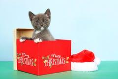 Graues und weißes Kätzchen der getigerten Katze im Weihnachtskasten Lizenzfreies Stockfoto
