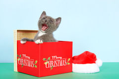 Graues und weißes Kätzchen der getigerten Katze im Weihnachtskasten Lizenzfreie Stockfotos