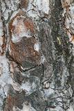 Graues, verwittertes, geknacktes natürliches Baumrindemuster Stockfotografie
