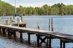 Graureiher auf Dock lizenzfreie stockfotos