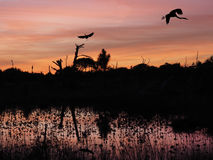 Graureiher-Länder im toten Baum im schönen Sonnenuntergang Stockfotografie