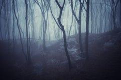 Grausigkeitszene eines dunklen Waldes mit blach Bäumen   Stockfoto