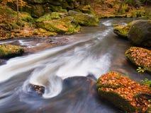Grava con las hojas caidas Orillas del río de la montaña del otoño Grava y cantos rodados cubiertos de musgo verdes frescos en lo Fotos de archivo libres de regalías