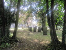 Gravar mellan träd Arkivbild