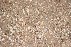 Gravas y cáscaras en la playa Imagenes de archivo