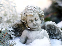 Grave angel in the snow. An angel with snowy firs royalty free stock photography