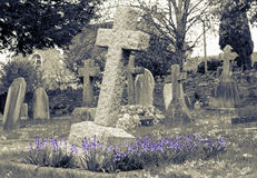 Grave Covered In Bluebells Royalty Free Stock Image