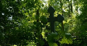 Grave cross among the lush greenery. Of the cemetery stock video