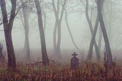 Grave. In the forest royalty free stock photography