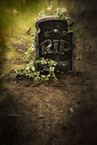 Grave with ivy Royalty Free Stock Images