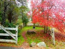 Grave of John Belushi, Martha's Vineyard, Massachusetts. Burial site of John Belushi on Martha's Vineyard, Massachusetts in fall foliage Stock Photography
