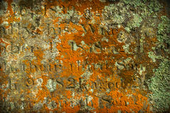 Grave Lichen Royalty Free Stock Image