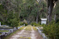 Grave Lined Dirt Road royalty free stock images