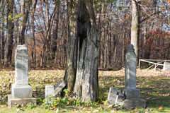 Grave Markers Under a Tree Stock Image