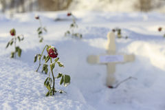 Grave with red roses in snow Royalty Free Stock Photos