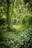 Grave Stones in Cemetery - 1 Stock Photo