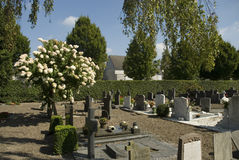 Grave-yard. Catholic grave-yard with flower tree Royalty Free Stock Images