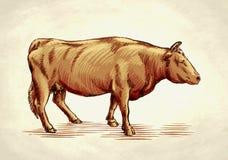 Graveer inkt trekken koeillustratie Royalty-vrije Stock Afbeelding