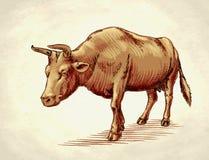 Graveer inkt trekken koeillustratie Royalty-vrije Stock Foto's