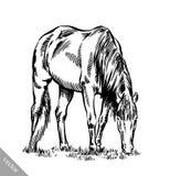 Graveer inkt trekken paardillustratie Stock Fotografie