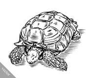 Graveer inkt trekken schildpadillustratie Royalty-vrije Stock Foto