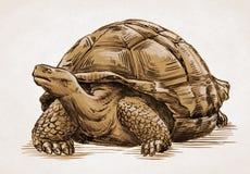 Graveer inkt trekken schildpadillustratie Royalty-vrije Stock Afbeelding