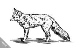 Graveer inkt trekken vosillustratie Stock Fotografie