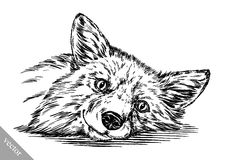 Graveer inkt trekken vosillustratie Royalty-vrije Stock Afbeeldingen