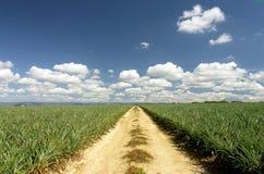 gravel дорога Стоковые Изображения RF