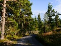 Gravel дорога леса в солнечности летний день Стоковые Изображения RF
