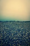 Gravel beach in the fog Royalty Free Stock Images