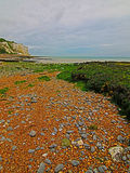 Gravel Beach and Seaweed at White Cliffs of Dover at St Margarets Bay Royalty Free Stock Photography