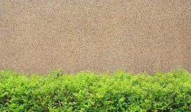 Gravel cement background with small decorative tree. Focus at pebble wall background royalty free stock image