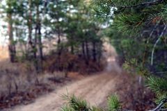 Forest trail in late autumn, overcast day stock photo