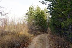 Forest trail in late autumn, overcast day royalty free stock images